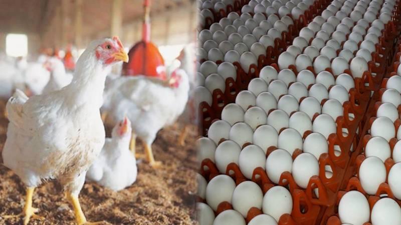 برائلر مرغی کی قیمتوں میں تین دن کمی کے بعد پھر اضافہ