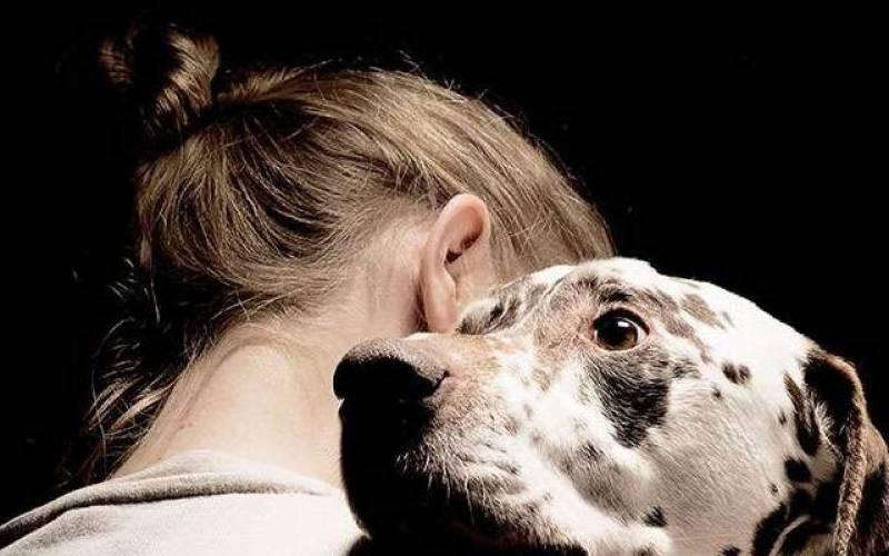 کتے کی وفاداری، ایمبولینس کیساتھ بھاگتے ہوئے ہسپتال پہنچ گیا