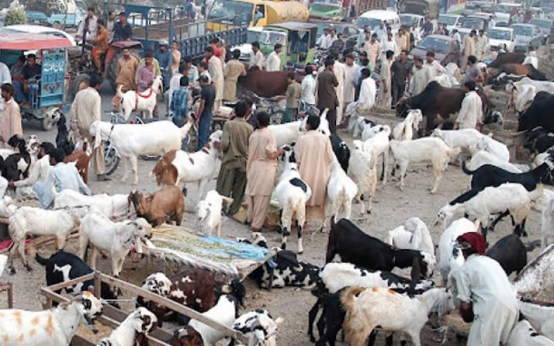 مویشی منڈیوں میں جانوروں کی قیمتیں اچانک کم ۔۔اہم وجہ بھی سامنے آ گئی