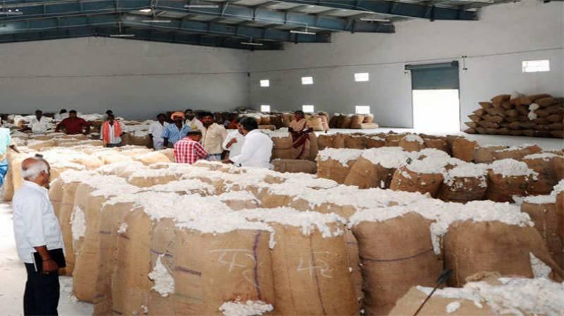 روئی کی قیمتوں میں غیر معمولی اضافہ، کسان خوش